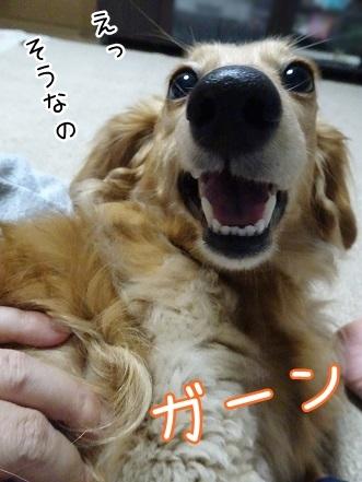 kinako7530.jpg