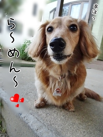kinako7540.jpg