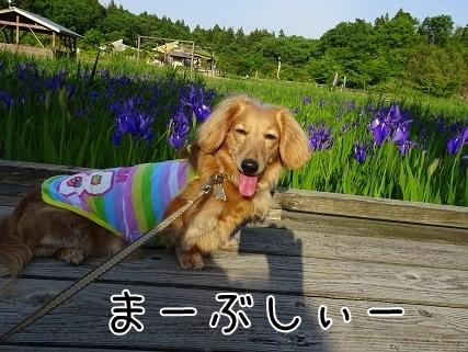 kinako7549.jpg