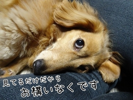 kinako7552.jpg