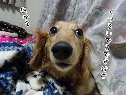 kinako7567.jpg