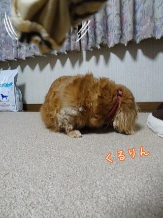 kinako7573.jpg