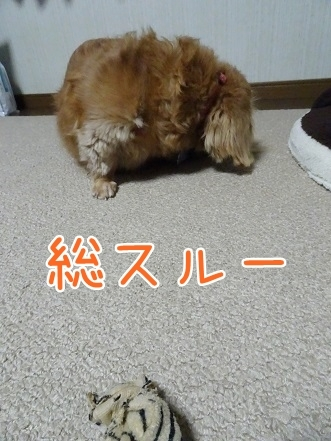 kinako7576.jpg