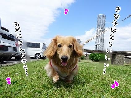 kinako7578.jpg