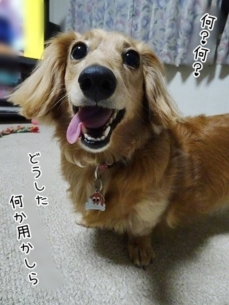 kinako7613.jpg