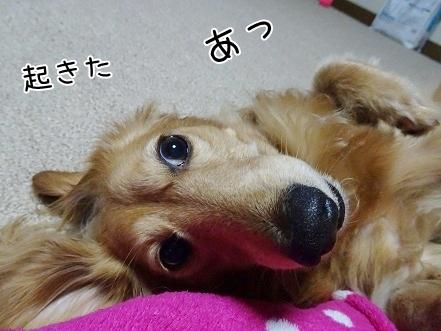 kinako7615.jpg