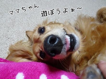 kinako7616.jpg
