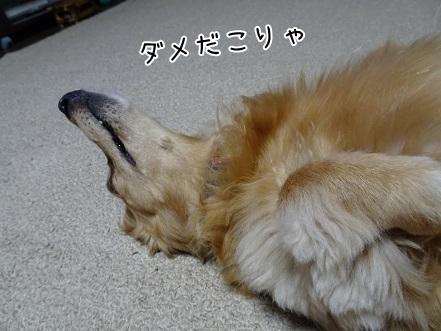 kinako7618.jpg