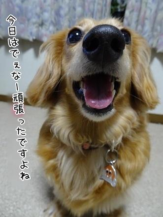 kinako7634.jpg