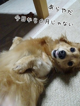 kinako7639.jpg