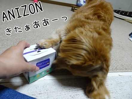 kinako7644.jpg