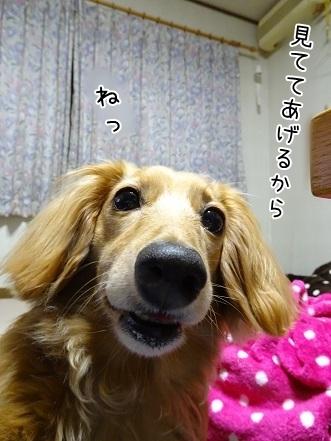 kinako7649.jpg