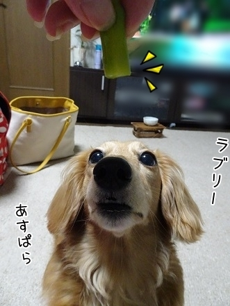 kinako7653.jpg