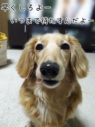 kinako7658.jpg