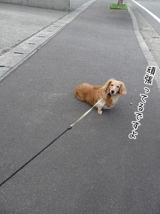 kinako7661.jpg