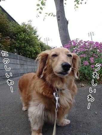 kinako7662.jpg