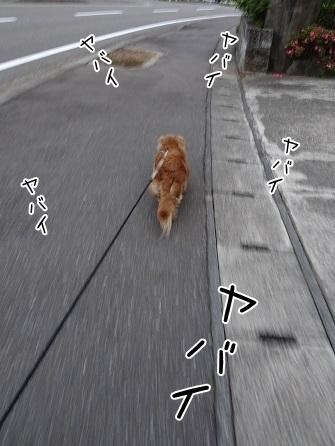 kinako7664.jpg
