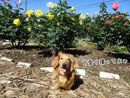 kinako7680.jpg