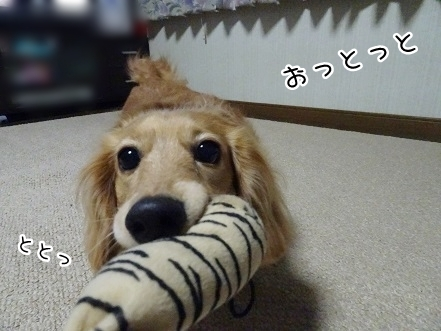 kinako7692.jpg