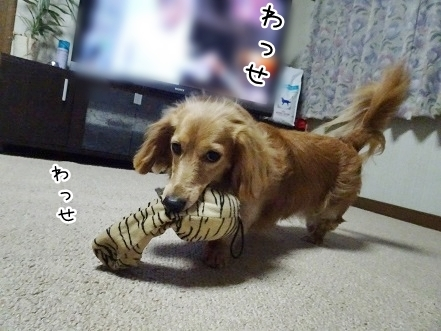 kinako7693.jpg