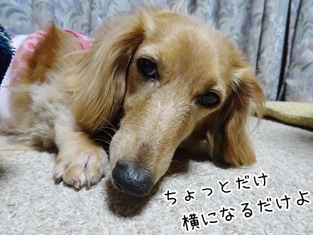 kinako7707.jpg