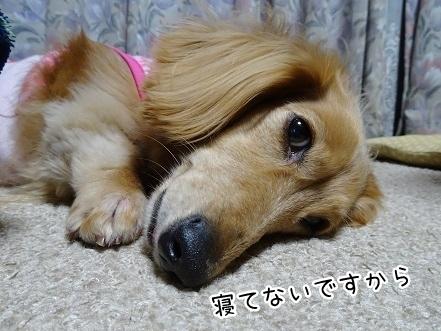 kinako7709.jpg