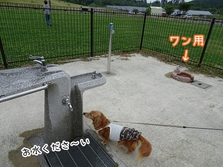 kinako7714.jpg