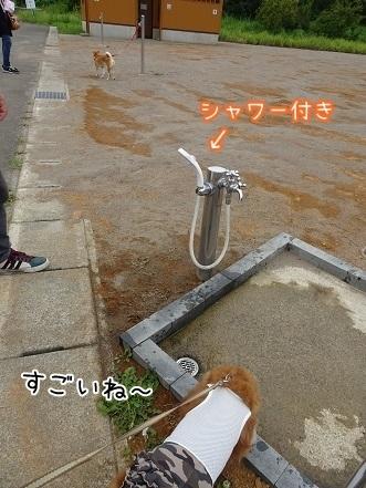 kinako7715.jpg