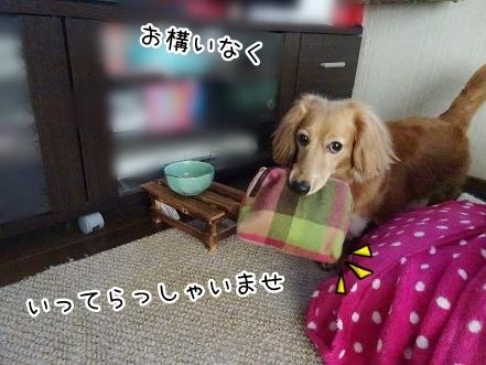 kinako7719.jpg