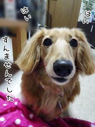 kinako7720.jpg