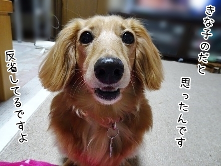 kinako7721.jpg