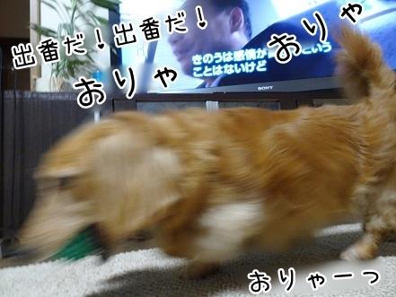 kinako7724.jpg