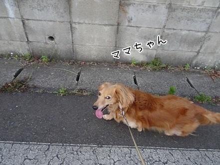 kinako7730.jpg