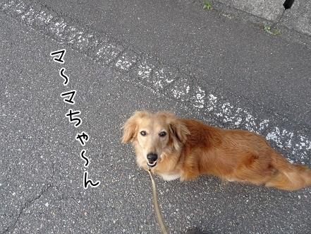 kinako7731.jpg