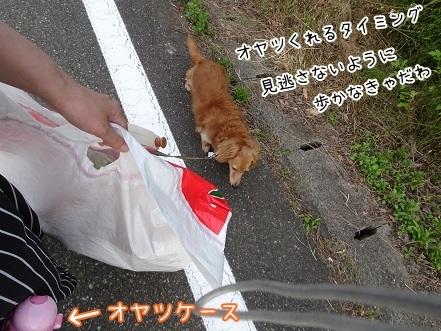 kinako7732.jpg