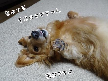 kinako7739.jpg