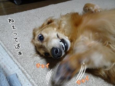 kinako7740.jpg