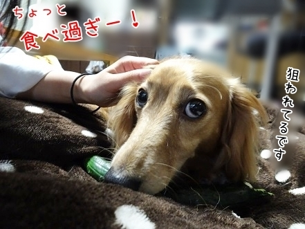 kinako7746.jpg
