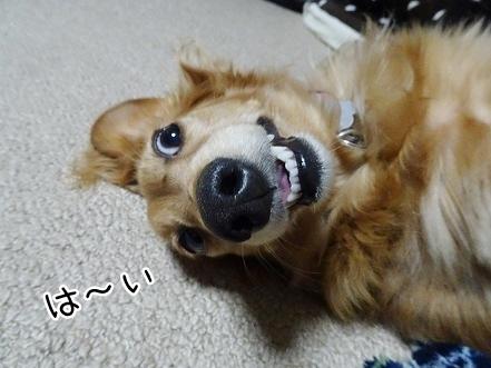 kinako7756.jpg