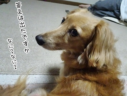 kinako7759.jpg