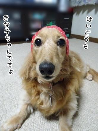 kinako7783.jpg