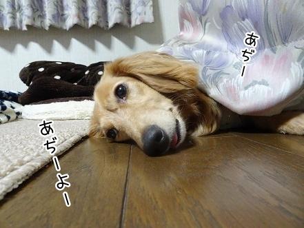 kinako7796.jpg