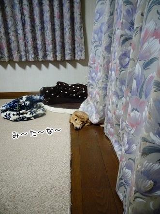 kinako7799.jpg