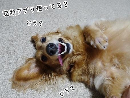 kinako7814.jpg