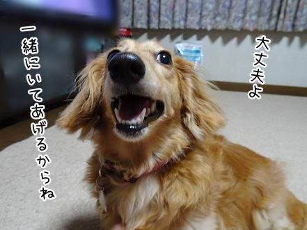 kinako7819.jpg