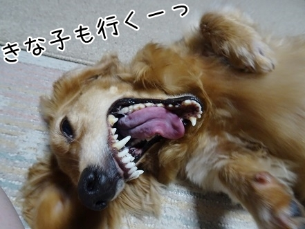 kinako7824.jpg