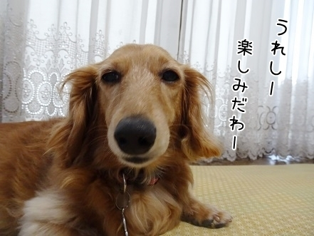 kinako7829.jpg