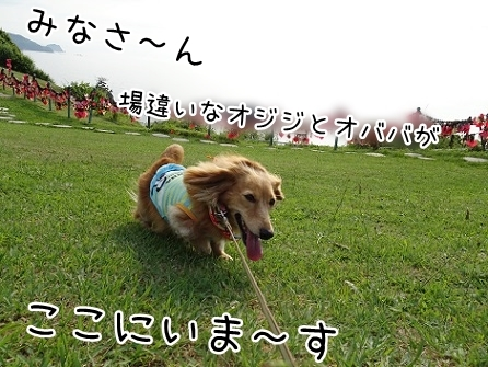 kinako7835.jpg