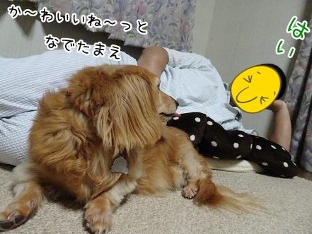 kinako7843.jpg