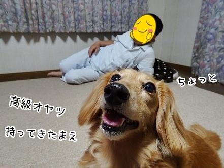 kinako7845.jpg